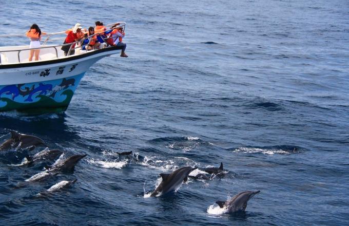 賞鯨趣|多羅滿賞鯨船公司